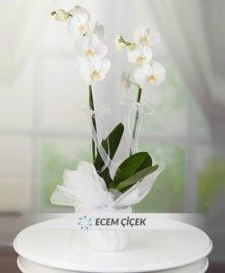 Çift Dallı Beyaz Orkide
