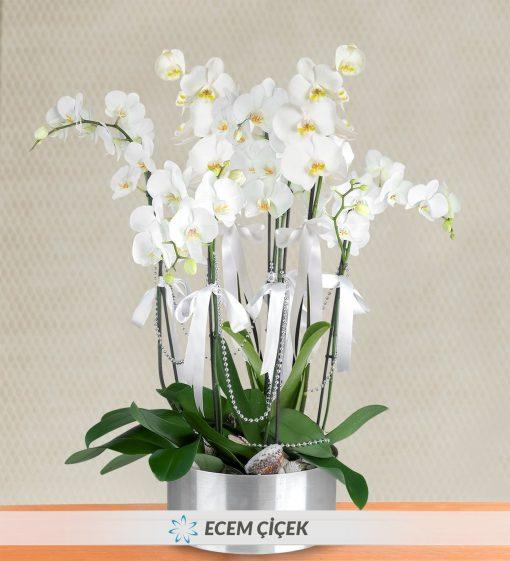 7 Dal Beyaz Orkide Aranjmanı