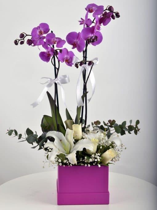 Çift Dallı Fuşya Orkide Arajmanı – 1