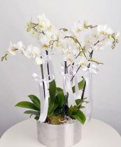 5 Dal Beyaz Orkide -2