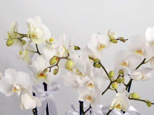 5 Dal Beyaz Orkide – 4