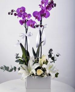 Beyaz Hediyelik Kutuda Orkide Bahçesi – 2