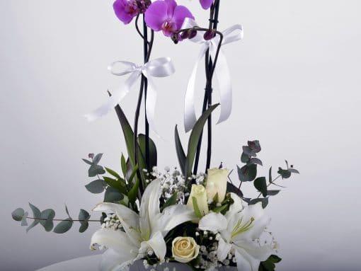 Beyaz Hediyelik Kutuda Orkide Bahçesi – 3