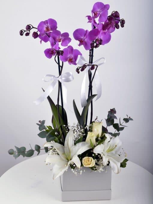 Beyaz Hediyelik Kutuda Orkide Bahçesi – 4