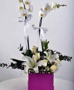 Hediye Kutusunda Çift Dallı Beyaz orkide – 2