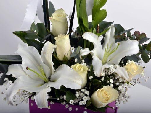 Hediye Kutusunda Çift Dallı Beyaz orkide – 4