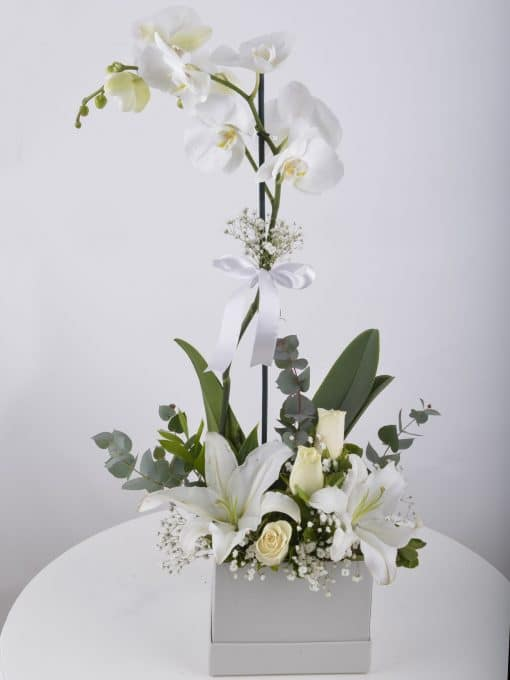 tek-dalli-orkide-kutuda