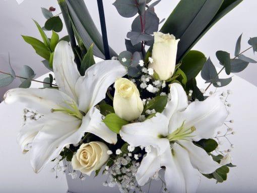 tek-dalli-orkide-kutuda1-2
