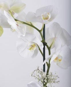 tek-dalli-orkide-kutuda1-3